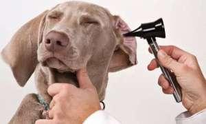 狗狗害怕医生怎么办?怎么让狗狗不害怕医生